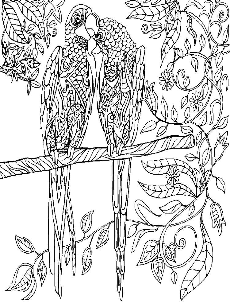 Раскраски антистресс попугай