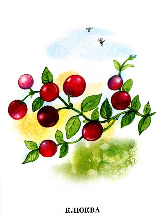 Лесные ягоды рисунок