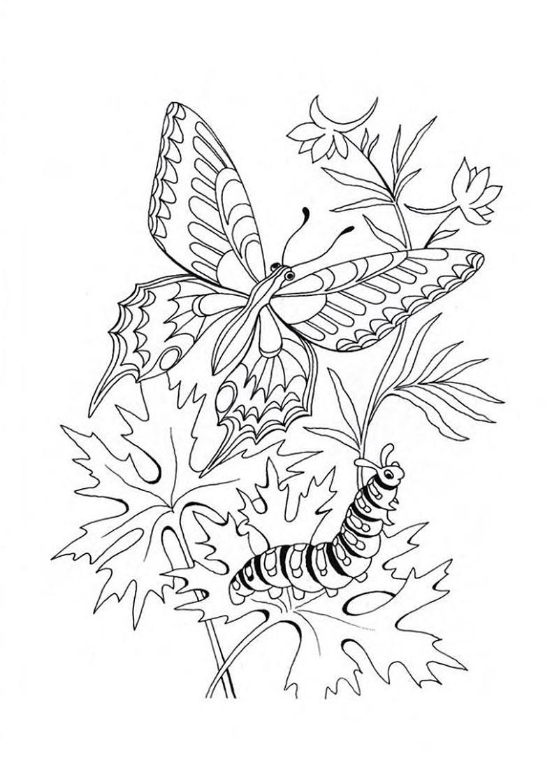 Растения и животные в раскрасках