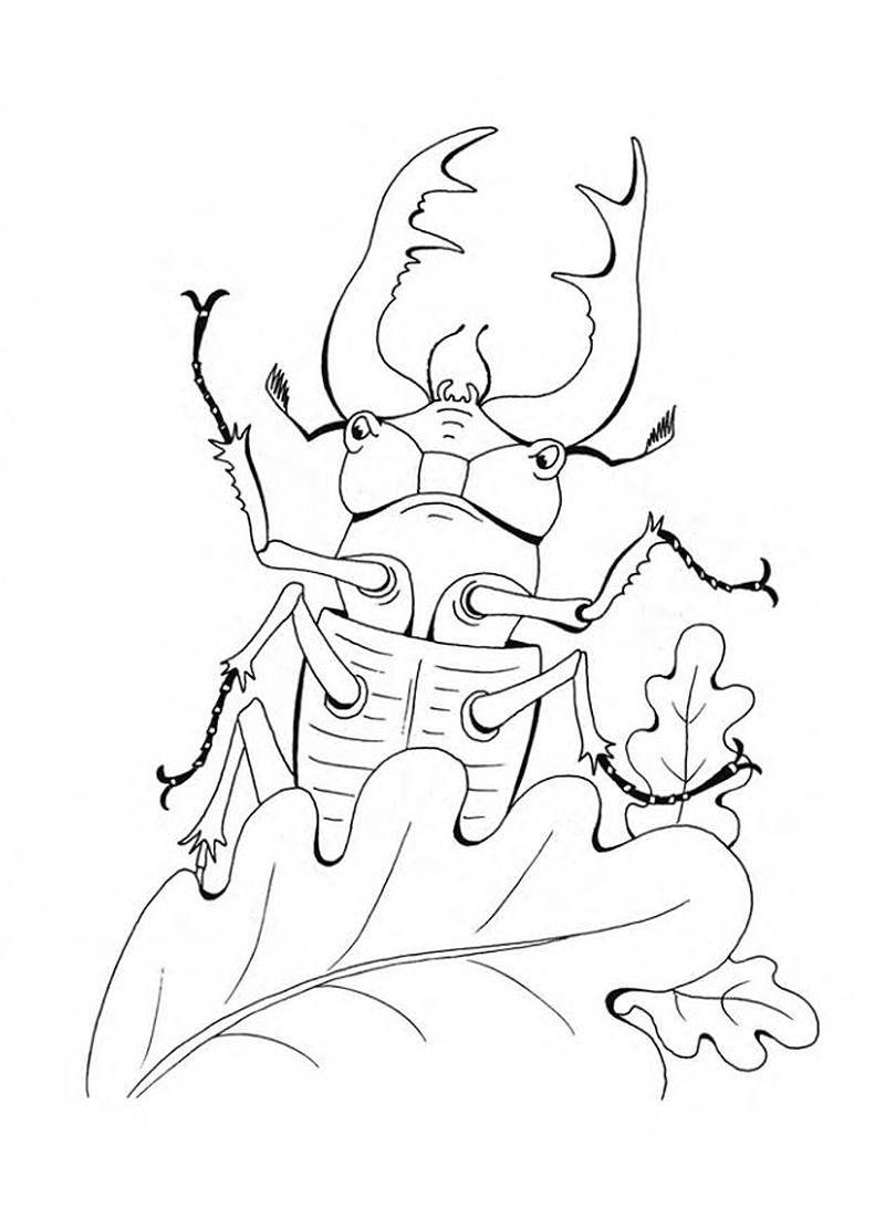 раскраска жук носорог распечатать прошлой